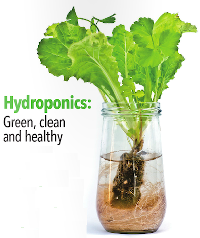 Hydroponics - Clean, Green and Healthy